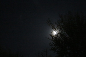 The Moon illuminating the Scheinin backyard.