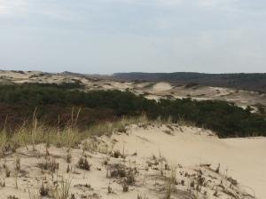 Parabolic sand dunes territory. Truro, Cape Cod.