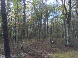 A portion of Hawksnest State Park's forest.